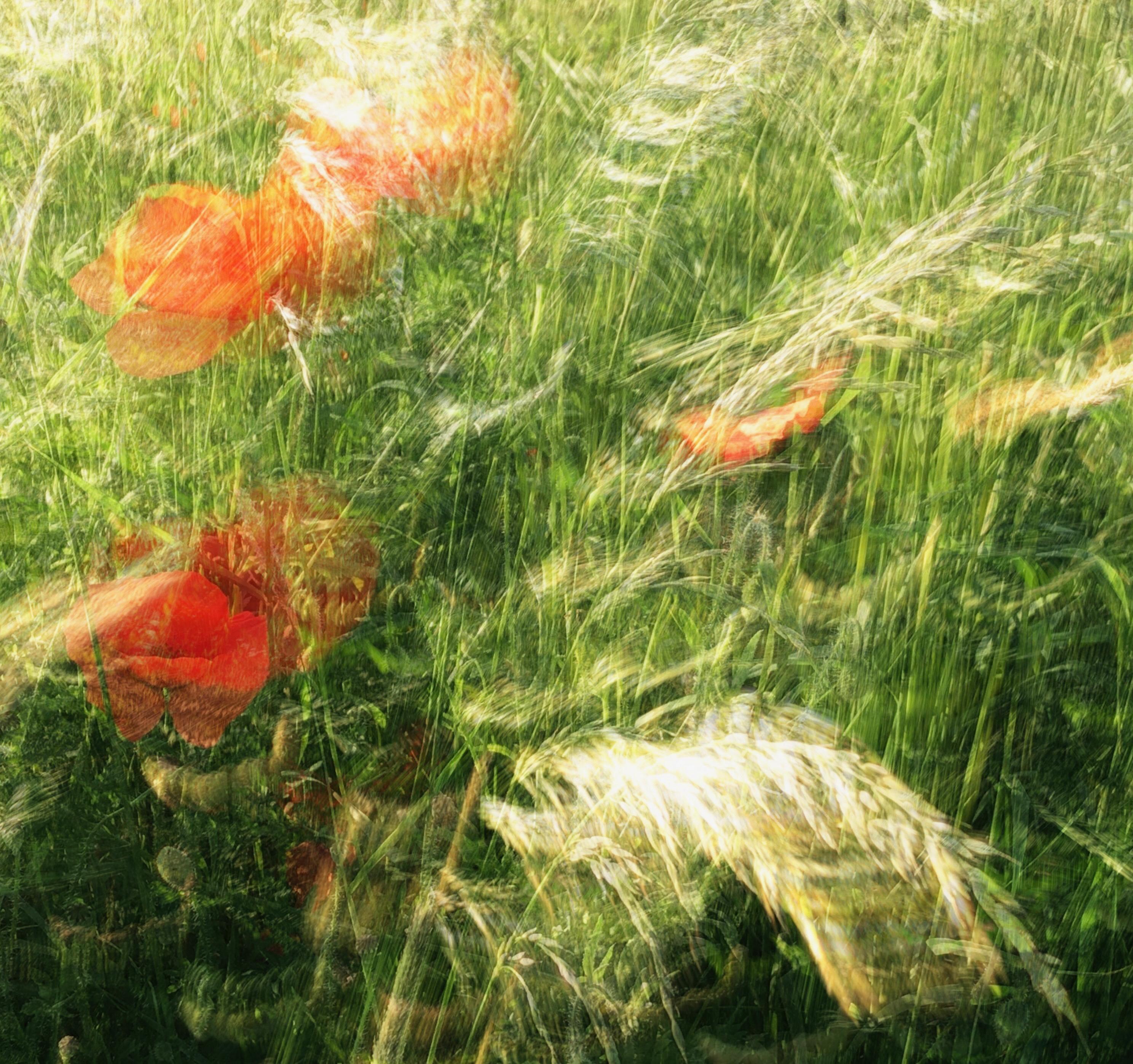 Un ejemplo de una foto de movimiento de cámara intencional de algunas flores