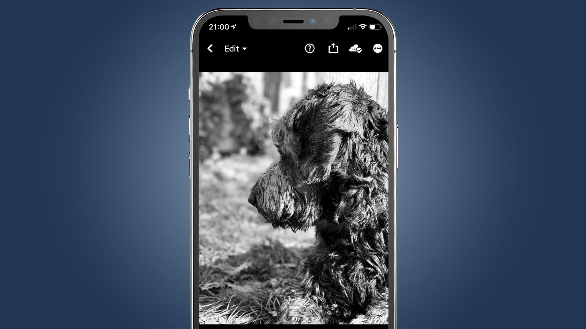 Una foto de perfil en blanco y negro de un perro